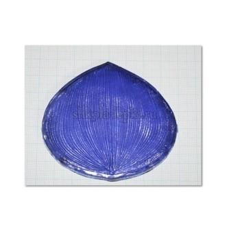 Молд цимбидиум, размер M