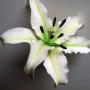 ручная работа, handmade, Ярмарка Мастеров,тычинки,тычинки для цветов,тюльпан,тычинки для тюльпана,черный,салатовый,тычинки,тычинки для цветов,тюльпаны,лимонный,анемоны,мак,тюльпан,реалистичные цветы,реалистичная флористика,лилия,коричневый,желтый,белый,тычинки большие,тычинки купить,тычинки фактурные,тычинки японские