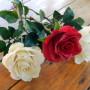 Розы, мастер Маковская Ольга miniviolets, Можайск