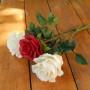 Розы, мастер Маковская Ольга miniviolets, г. Можайск