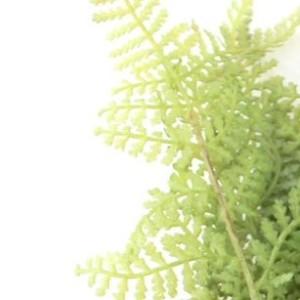 Искусственная зелень папоротник декоративный