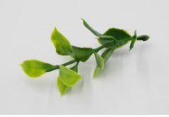 Искусственная зелень веточка для вставки в букеты