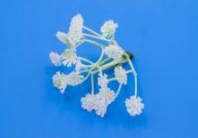 Искусственные цветы соцветие гипсофилы для вставки в букеты, для декора