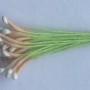 ТТ двухцветные бежево белые головки салатовая нить