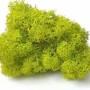 Ягель зеленый лайм