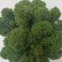 Ягель зеленый средний