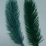 Ветока  ели поштучно темно-зеленая ель и голубая ель